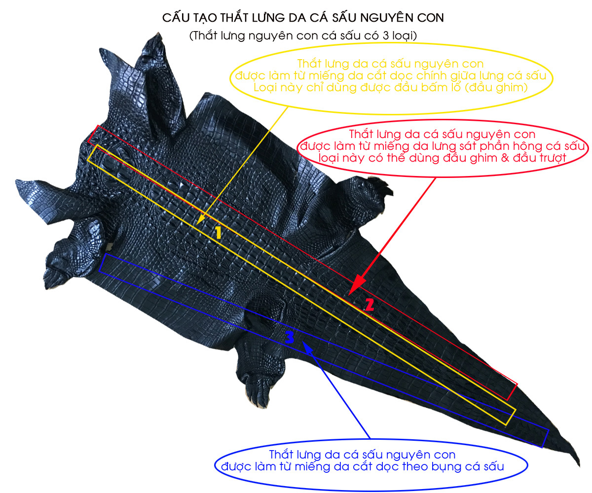 Cấu tạo của thắt lưng da cá sấu nguyên con